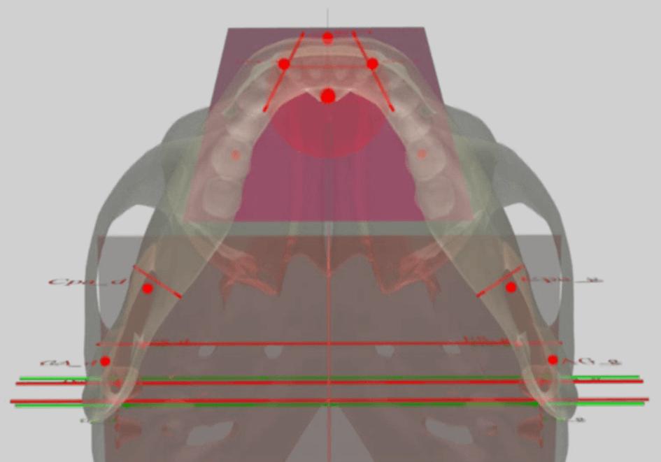 Mandibule : Morphologie / Position